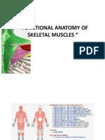 Anatomy Reviewer- Skeletal Muscles