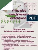 3 Principios Mendelianos