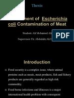 Assessment of  Escherichia coli Contamination of Meat