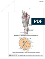 Adductor Canal - Wikipedia, The Free Encyclopedia