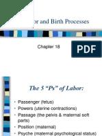 Labor and Birth Processes
