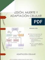 2 -Lesion, Muerte y Adaptacion