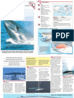 Wildlife Fact File - Mammals - Pgs. 11-20