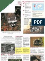 Wildlife Fact File - Mammals - Pgs. 31-40