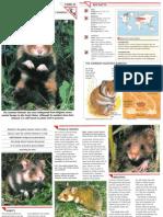 Wildlife Fact File - Mammals - Pgs. 41-50