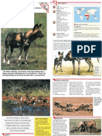 Wildlife Fact File - Mammals - Pgs. 101-110