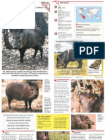 Wildlife Fact File - Mammals, Pgs. 161-170