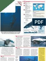Wildlife Fact File - Mammals, Pgs. 181-190