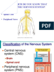 Anatomy - The Nervous System Powerpoint