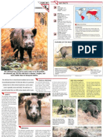 Wildlife Fact File - Mammals  Pgs. 281-290