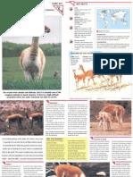 Wildlife Fact File - Mammals  Pgs. 341-343
