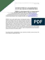 2009 - Alimentação de Baryancistrus L18 (amarelinho) e Baryancistrus L47 (aba laranja) no medio rio Xingu