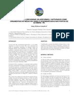 2009 - Diversidade de loricariidae (Siluriformes) capturados como ornamentais no médio rio Xinug e desembarcados nos portos de Altamira - PA