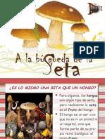 Exposición_setas