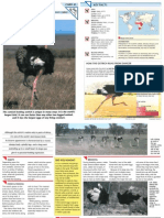 Wildlife Fact File - Birds - 21-30