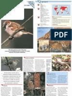 Wildlife Fact File - Birds - 41-50