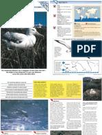 Wildlife Fact File - Birds - 51-60