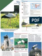Wildlife Fact File - Birds - 61-70