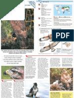 Wildlife Fact File - Birds - 71-80