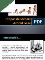 Etapas Del Desarrollo de Arnold Gesell