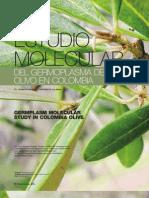 Estudio Molecular del Germoplasma del Olivo en Colombia
