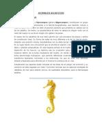 Animales Acuaticos y Terrestres