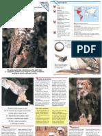 Wildlife Fact File - Birds - Pgs. 111-120