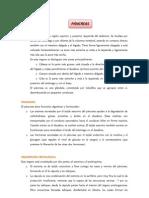 Histologia de Pancreas