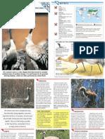 Wildlife Fact File - Birds - Pgs. 161-170