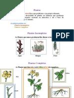 Constituição Das Plantas Andreia
