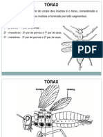 Anatomia Externa Torax Abdomen