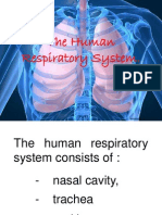 1. the Human Respiratory System