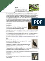 fauna del cerro colorado cordoba.doc