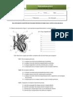 Teste 3 - Circulatorio
