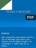 Vejiga y MicciÓn