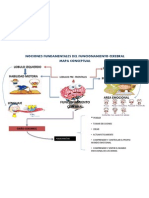 Mapa Conceptual Funcionamiento Cerebral