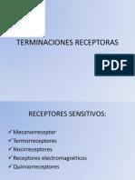 TERMINACIONES RECEPTORAS