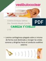 Órgano vestibulococlear (1)