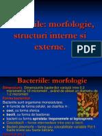 Structura bacteriilor
