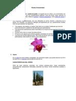 Una planta ornamental o planta de jardín.docx