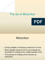 Physiology of micturition reflex