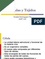Profa. k. Dominguez Avet 120 Celulas_tejidos