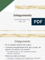 Profa. k. Dominguez Avet 120 Integumento