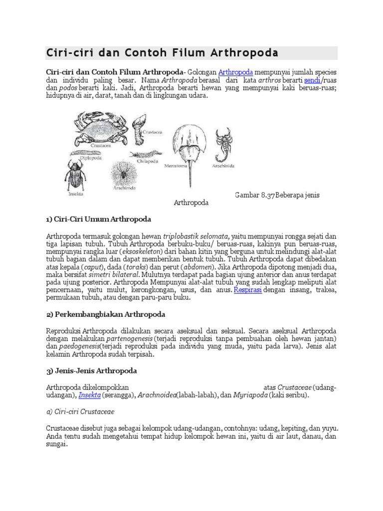 7700 Koleksi Gambar Hewan Filum Arthropoda HD Terbaru