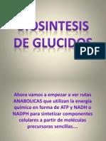 Biosintesis de Glucidos