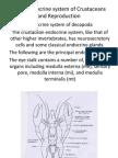 Neuroendocrine of Crustacea