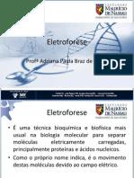 14_eletroforese
