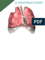 Aparato Respiratorio_14.ppt