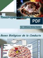 Neuropsicología 01