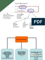 17-vibrioycampylobacter-120813233528-phpapp01